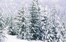 أمطار متفرقة غداً صباحاً والثلوج تلامس 600 متر